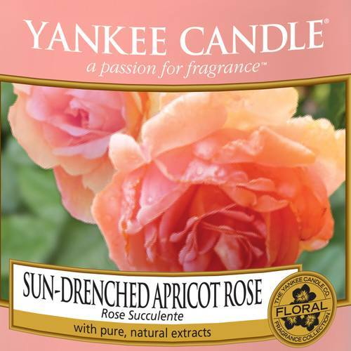 Sun-Drenched_Apricot_Rose_Icon